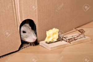 403803-rat-mousetrap-and-cheese-Stock-Photo